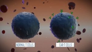 magnified image of CAR-T cells.